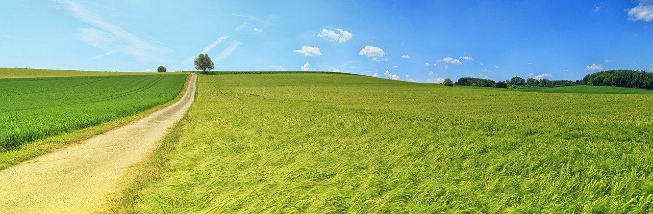 panorama, summer, meadow